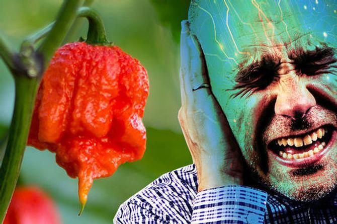 Hombre sufre daño cerebral tras comer el chile más picante del mundo (+FOTO)