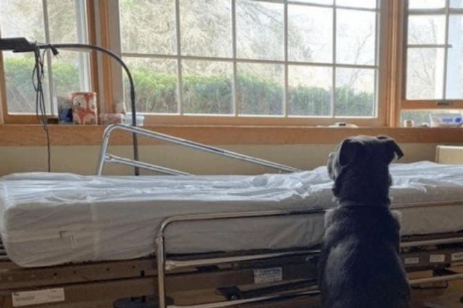 Perro se queda en el hospital a la espera de su dueño fallecido #FOTO
