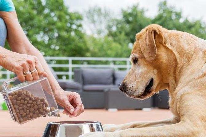 Recomiendan sana alimentación de mascotas en cuarentena para evitar sobrepeso