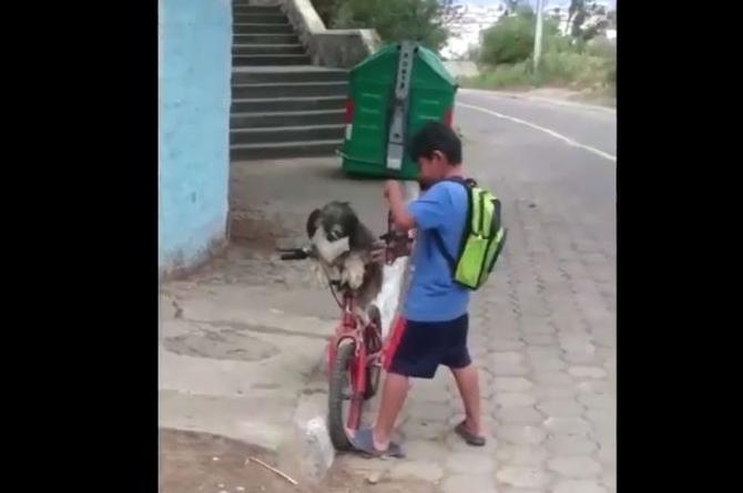 Niño protege con cubrebocas a su perrito para pasearlo en bicicleta (+video)