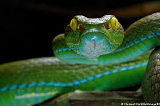 Cuidado inicia temporada de serpientes